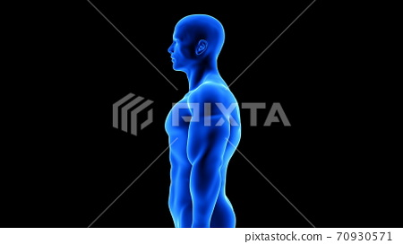male fitness body - muscle mass building illustration on black background 70930571
