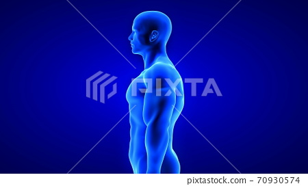 male fitness body - muscle mass building illustration on blue background 70930574