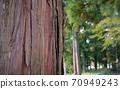 杉樹樹皮 70949243