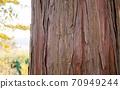 삼나무 나무 껍질 업 70949244