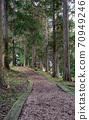 버크 칩의 삼나무 길 70949246