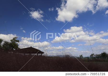 핑크뮬리그라스가 보이는 아름다운 가을 풍경 70951726