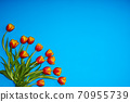 Tulips flowers on natural background. 70955739