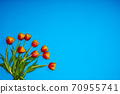 Tulips flowers on natural background. 70955741