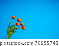 Tulips flowers on natural background. 70955743