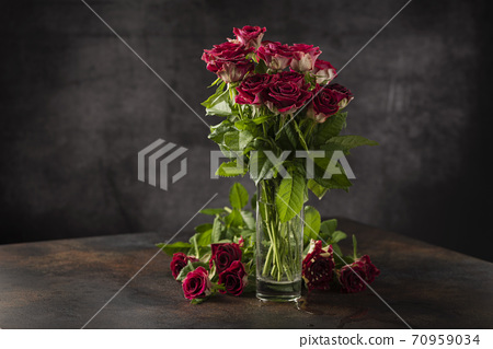 Red wild roses 70959034