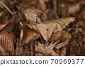 Creatures, insects, Namiten Atsuba, do not notice their existence until they jump out from their feet. It has turned into dead leaves on the ground. 70969377
