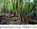 如画的森林,金地池水上乐园 70981130