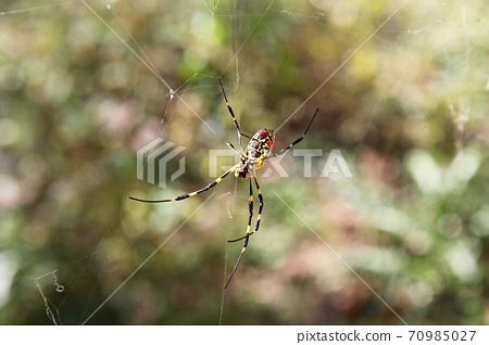 蜘蛛 70985027