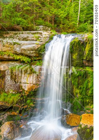 Wild Forest Waterfall 70988409