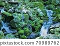 美丽的苔藓岩石,清水石流,淡仓13种,日本森林,天然林,若杉天然林100种 70989762