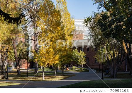 Beautiful fall color around the campus of Northern Arizona University 70993168