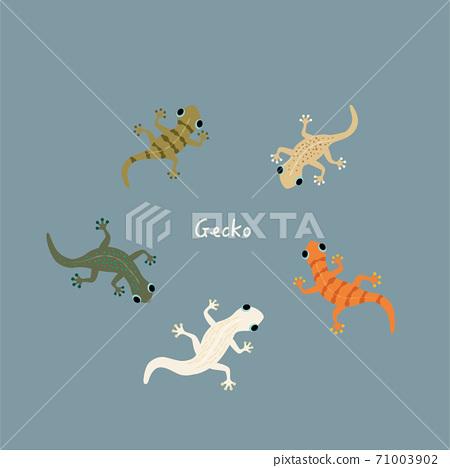 Colorful gecko illustration set 71003902