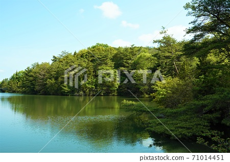 연못과 녹색 71014451