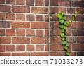 담쟁이와 붉은 벽돌 71033273