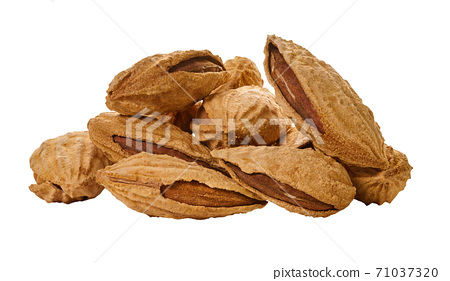 almonds shell with clipping path 71037320