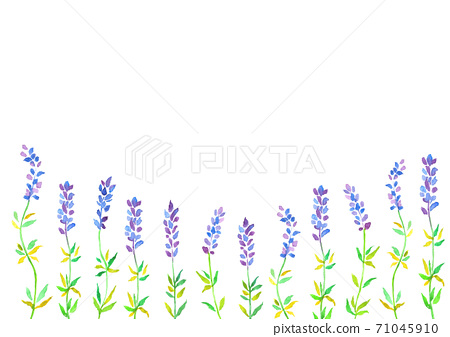 Lavender background illustration 71045910