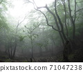 Fantastic forest in the haze 71047238