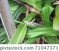 A big grasshopper found in the woods 71047371