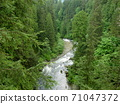 A torrent river flowing through the forest 71047372
