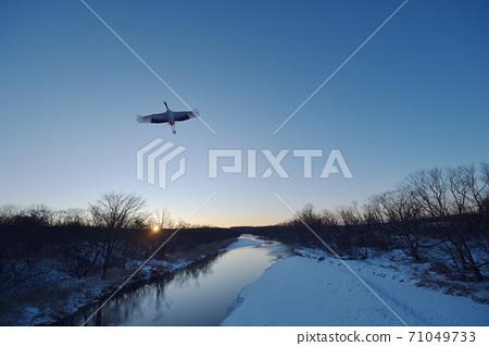 일출과 함께 잠자리에서 날아 두루미 (홋카이도) 71049733