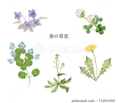 春天的花朵水彩畫集 71063993