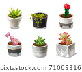 Plants and pots 71065316