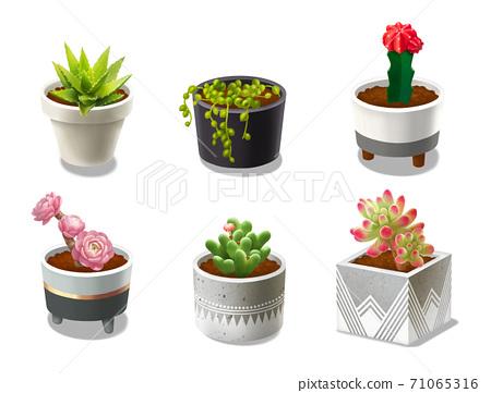植物和盆 71065316