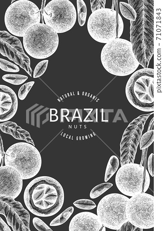 Hand drawn brazilian nut branch and kernels design template. Organic food vector illustration on chalk board. Retro nut illustration. Engraved style botanical banner. 71071843
