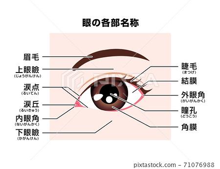 眼睛和眼睛周圍的每個部分的名稱矢量圖 71076988