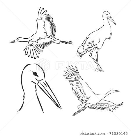 White stork illustration, drawing, engraving, ink, line art, vector, stork, vector sketch illustration 71080146