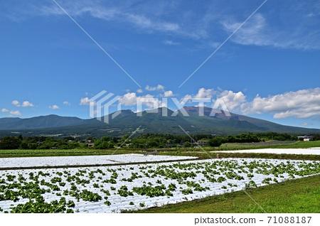 從宮田町看到的新鮮綠色淺間山和高原蔬菜田 71088187