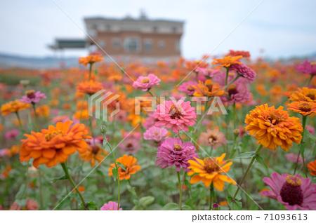 盛夏的花園 71093613