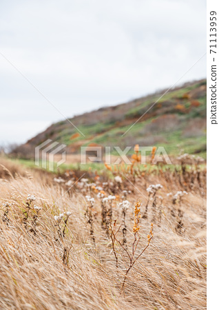 Autumn alpine plants 71113959