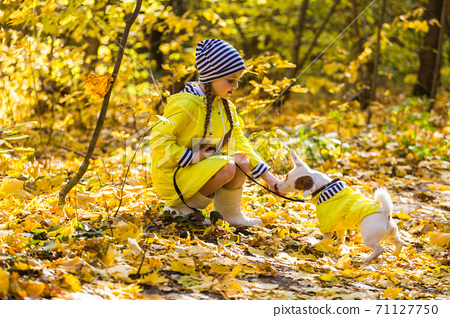 Child plays with Jack Russell Terrier in autumn forest. Autumn walk with a dog, children and pet concept. 71127750
