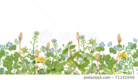 Spring field where horsetail grows 71142649
