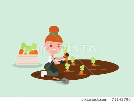 Female Gardener cartoon Harvesting carrot 71143796