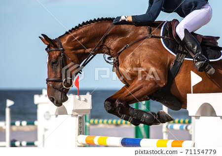 Horse Jumping, Equestrian Sports themed photo. 71154779