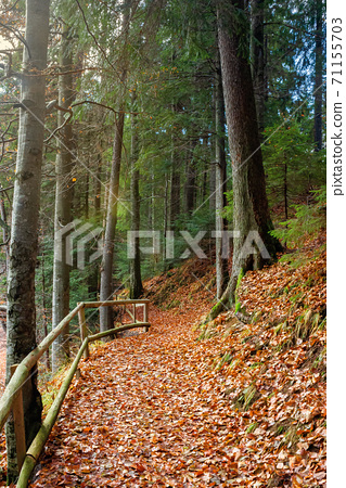 pathway through the forest. beautiful autumn scenery. wooden fence along the walkway covered in fallen foliage 71155703