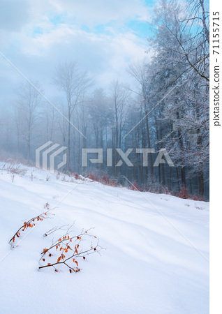 forest on a snow covered slope. trees in hoarfrost. mysterious foggy weather in the morning. beautiful winter scenery 71155715