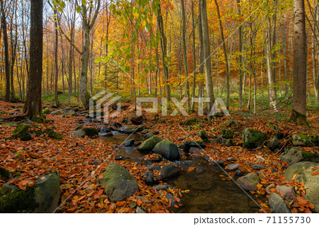 brook in the forest. wonderful nature scenery on a sunny autumnal day. trees in colorful foliage. water stream among the rocks and fallen leaves on the ground 71155730
