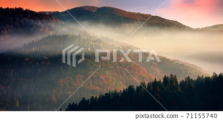 dramatic autumn dawn in mountains. beautiful nature background. fog above the forested hills in red foliage 71155740