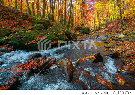 mountain river in the forest. water flow among the rocks. trees in autumn colors. sunny forenoon weather. beautiful nature background 71155758