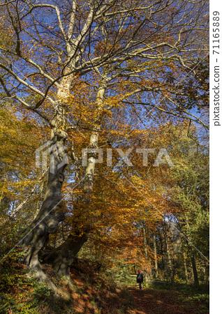 Autumn colors - North Yorkshire - United Kingdom 71165889