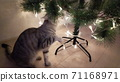 Cute gray cat playing and biting lights 71168971