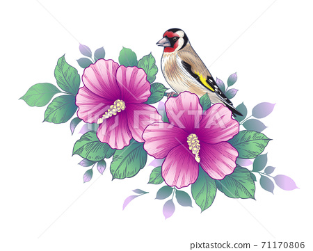 Hand Drawn Goldfinch Sitting on Hibiscus Branch 71170806