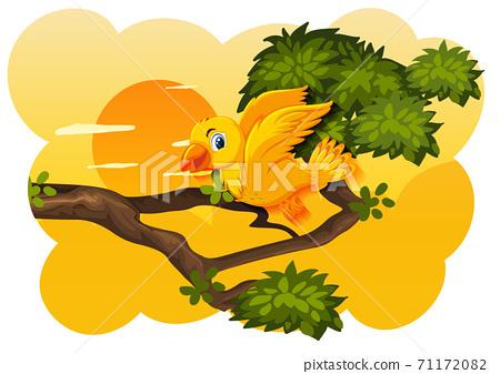 Bird in nature sunset scene 71172082