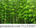 Bright green bamboo forest 71172567