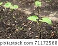 Bean buds 71172568