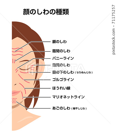 女人的臉上的皺紋(位置和名稱)矢量圖 71175257